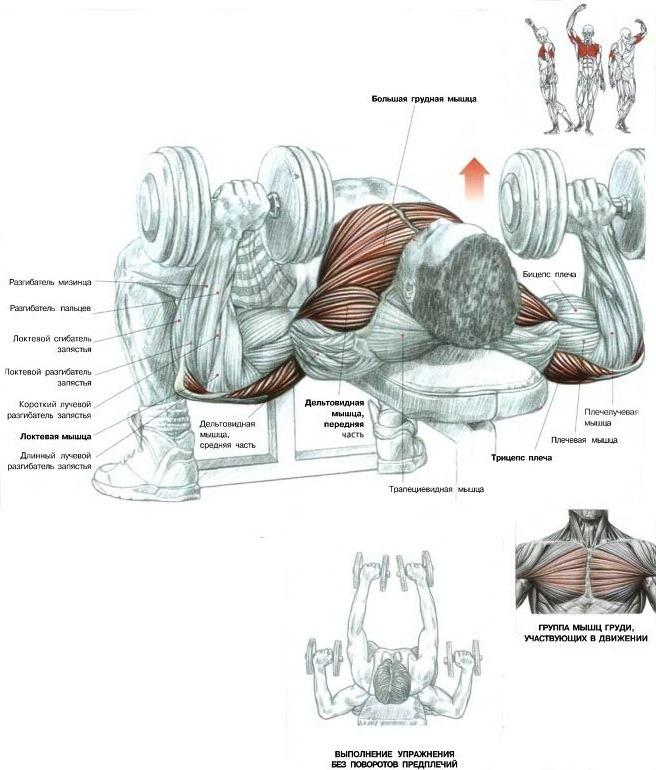 Антикризисная прокачка для ленивых айтишников (1 тренировка) - tiaurus.name 2014 06 12 12 12 15