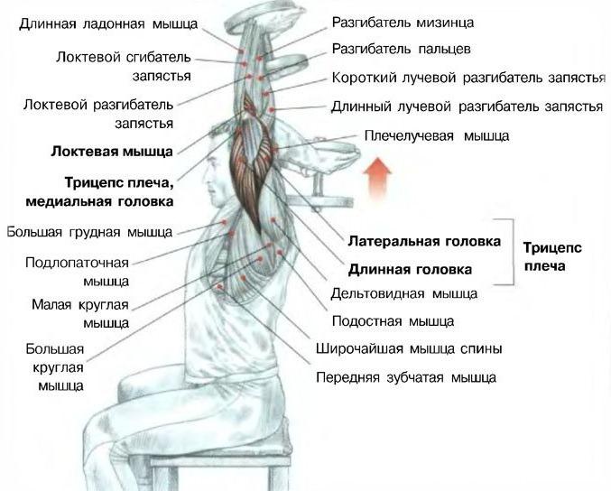 Антикризисная прокачка для ленивых айтишников (самое важное) - tiaurus.name 2014 06 12 14 54 29